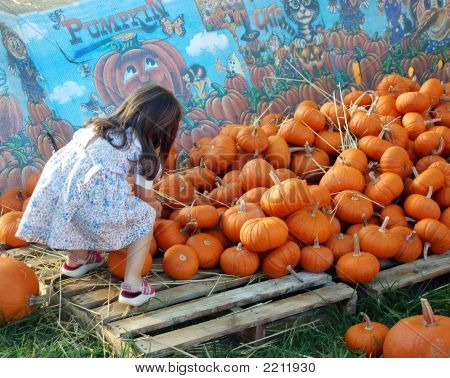Looking For The Rightpumpkin