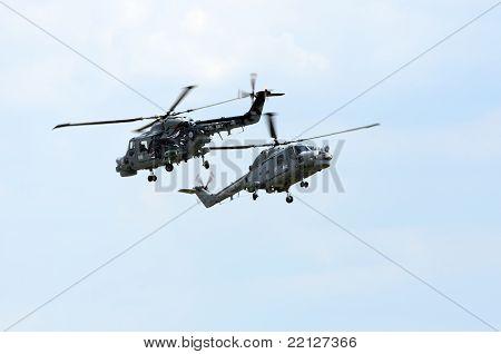 Royal Navy Black Cats