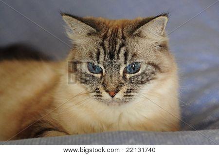 Julia, the cat