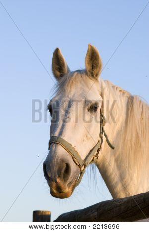 Horse_3356