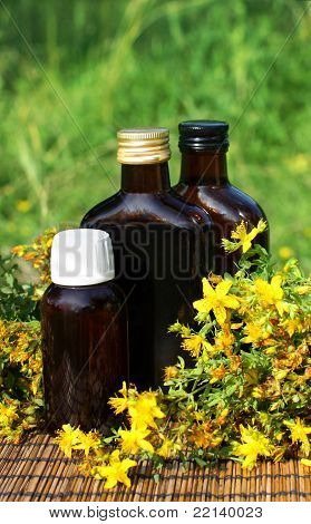 Medical Herb -st John's Wort (hypericum Perforatum)