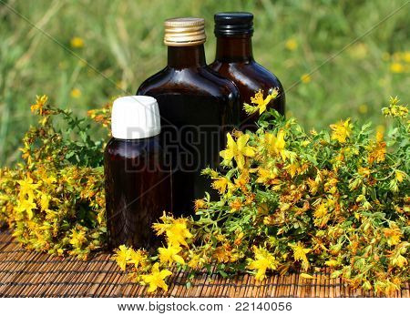 Medical herb -St John's wort