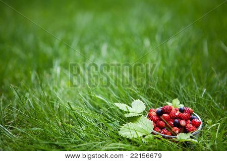 Small glass cup full of fresh forest berries on a green lawn