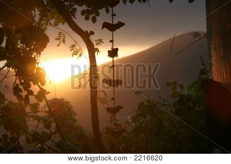 Sunrise With Vines And Mobile