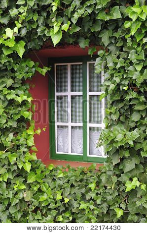 Window With Green Leafs