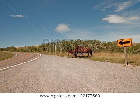 Horses In Pullout