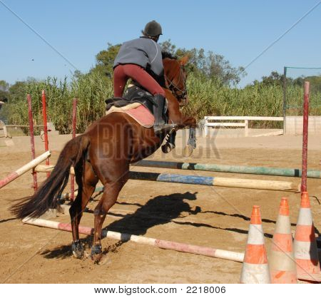 Jumping Brown Horse