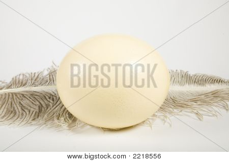 Huge Ostrich'S Egg And Feather