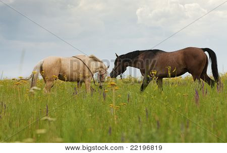 Horses On A Green Lawn