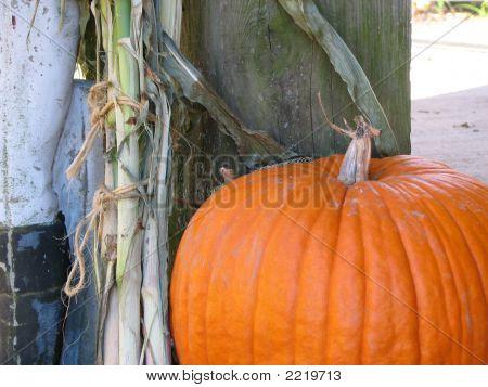 Snake On Pumpkin Lll