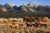 A group of horses running in a meadow in fall with a mountain backdrop at the Nature Conservancy Zap poster