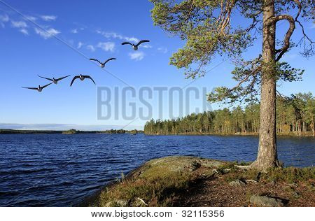 Low angle of a pine and a lake.