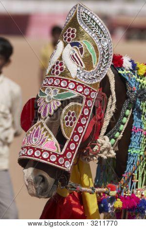 Indian Festival Horse