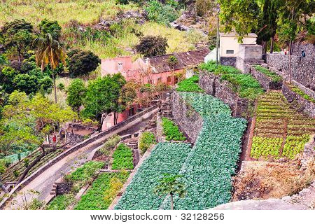 Farm In Cape Verde Island Of Sao Antao
