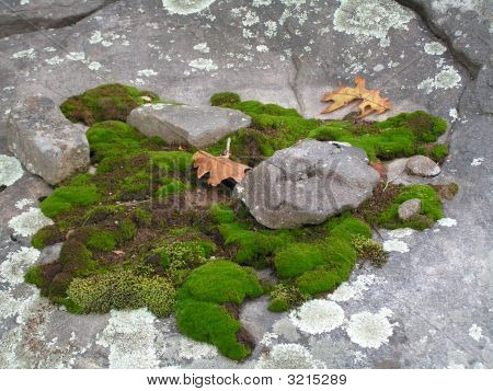 Naturally Occuring Moss Garden.