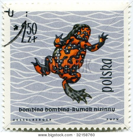 POLAND - CIRCA 1963: Polish stamp shows Bombina bombina (Fire-bellied Toad), series devoted to reptiles and amphibians, circa 1963