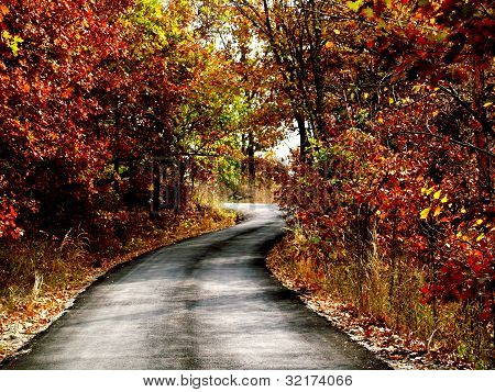 Winding Road Autumn Foliage