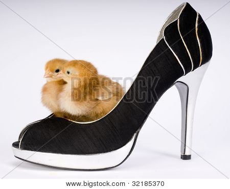 Two Chicks In A Shoe