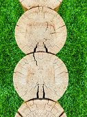 Several Tree Trunks. Cross Section. Cross Section Of Logs Texture. Wood Tree Trunk Texture, Close-up poster
