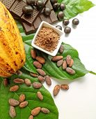 Cocoa Pod With Cocoa Beans, Powder, And Chocolates