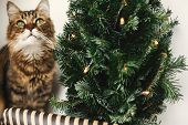 Tabby Cat With Green Eyes Sitting With Funny Emotions At Christmas Tree With Lights.  Maine Coon Rel poster