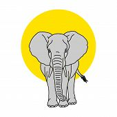Coloring Book For Kids And Adults Decorative Cartoon Elephant. Vector Cute Baby Elephant, Black Silh poster