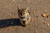 Homeless Ill Kitten In City Autumn Park. Stray Baby Cat Has A Watery Discharge From Eyes poster