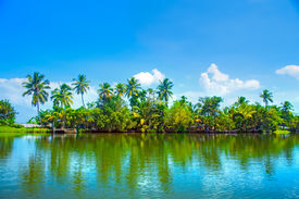 picture of alleppey  - Coconut trees near Backwaters - JPG