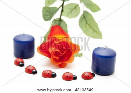 Ladybirds with Flower and Blue Candles