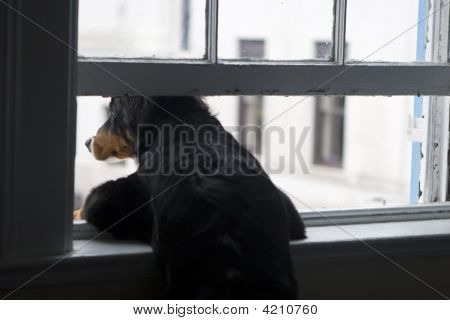 Dog Leaning Out Window