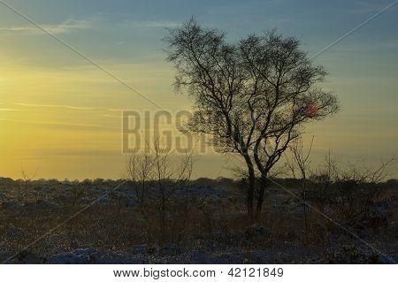 Setting Sun In The Snow