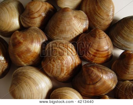 Mariscos de almejas