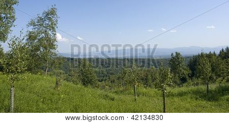 Scenery Around Liliental At Summer Time
