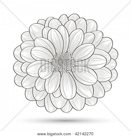 Hand-drawn Flower Chrysanthemum. Vector & Photo | Bigstock