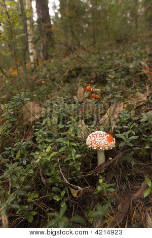 Mushroom And Berries