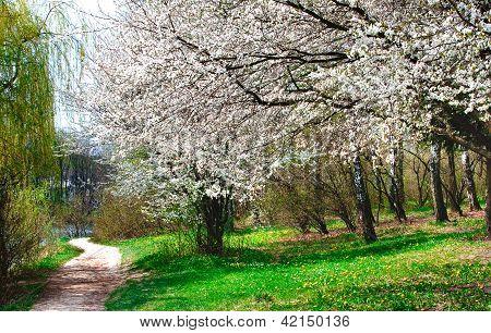 Spring Forest By Springtime.