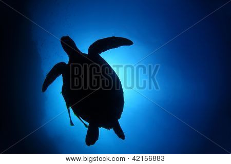 Turtle silhouette in deep blue sea. Coral reef wall of Balicasag island, Philippines