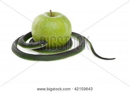 Snake Coiling Around A Green Apple