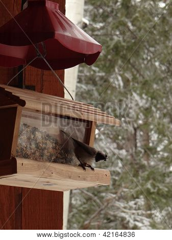 Mountain Chickadee On Feeding Station, . In Hills Above  . Vail