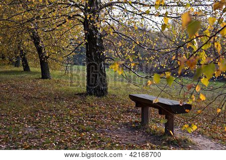 Autumn pew