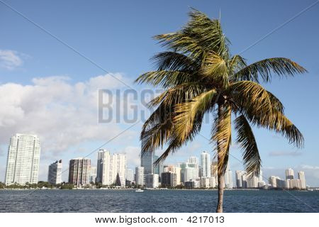 Palm and buildings in Brickell Miami