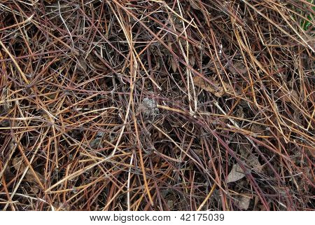 Pile Of Grey Dry Leaves And Stems In Early Spring