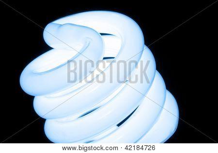 Macro Conservation Bulb