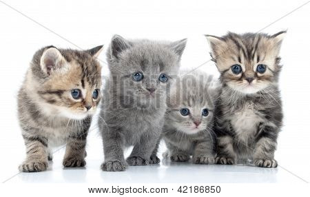 Portrait Of Young Cats' Group  . Studio Shot. Isolated.
