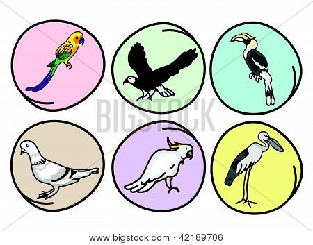 An Illustration Set Of Beautiful Wild Birds