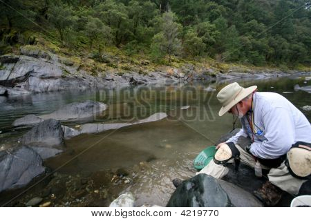Prospector ,Panning, Gold,