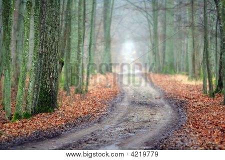 Beautiful Wood Road