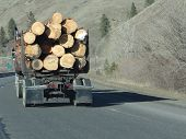stock photo of logging truck  - Logging truck carries huge logs Glenwood Canyon Colorado - JPG