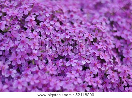 Background With Beautiful Purple Flowers With Bokeh