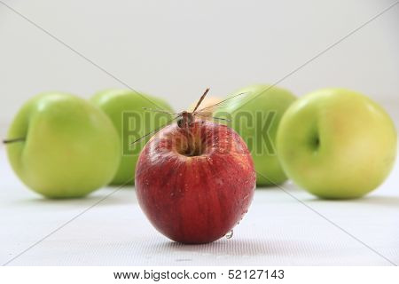 dragonfly and apple